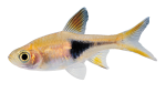 Little_Fish_png_by_AbsurdWordPreferred[1]